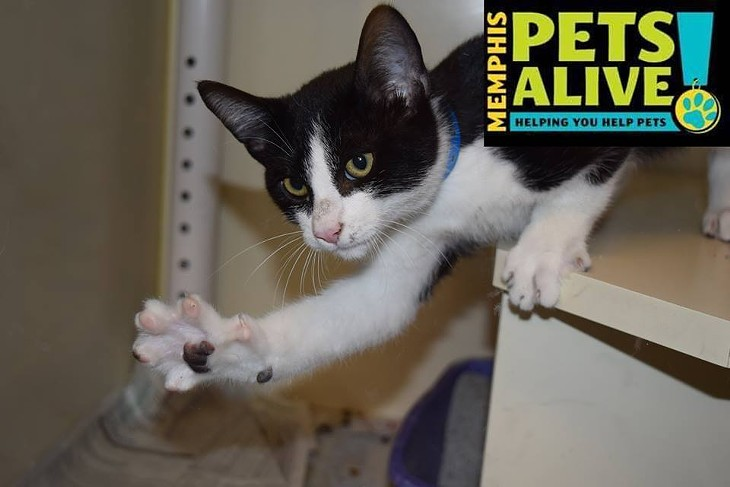 Memphis Pets of the Week (Oct. 13-19)