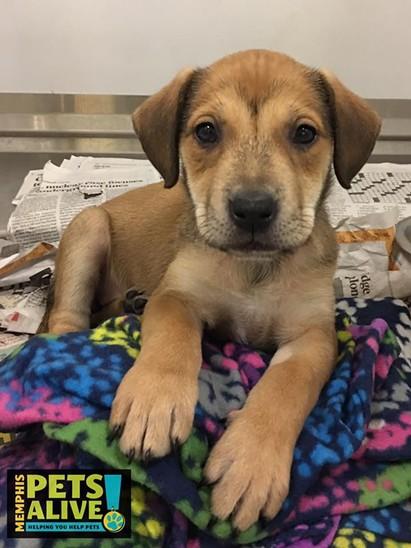 Memphis Pets of the Week (Jan. 12-18)