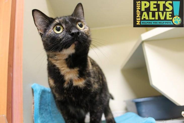 Memphis Pets of the Week (April 13-19)