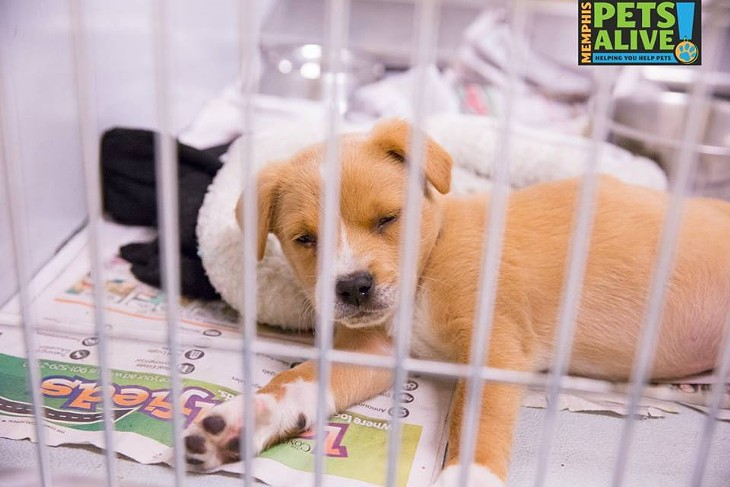 Memphis Pets of the Week (April 20-26)