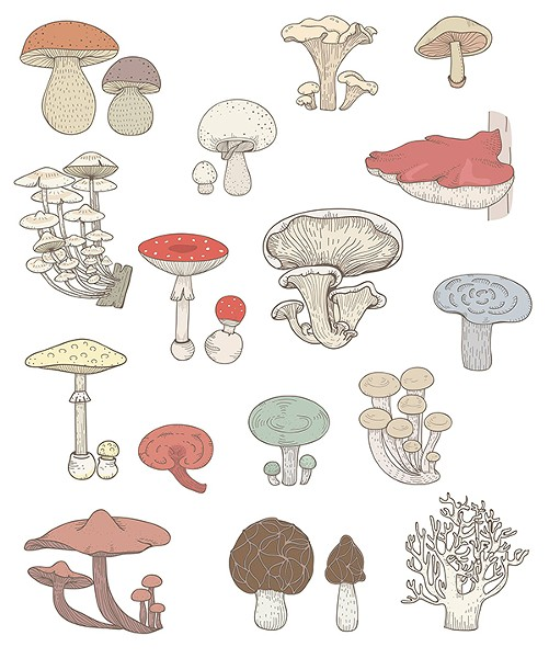 Looking to learn some fungi facts? - FACEBOOK/MEMPHIS MUSHROOM FESTIVAL