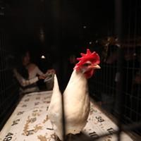 Ameripolitan Music Awards 2019 Wanda the Chicken, making bingo all over the place Jamie Harmon