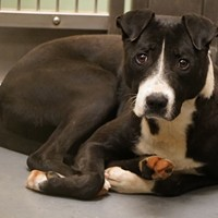 Memphis Pets of the Week (March 14-20)