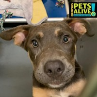 Memphis Pets of the Week (8/6/19-8/12/19)