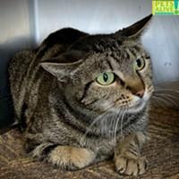 Memphis Pets of the Week (12/31/19-1/6/20)
