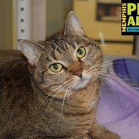 Memphis Pets of the Week (Feb. 16-22)