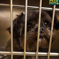 Memphis Pets of the Week (March 16-22) #A294248 Male, 6 years, 7.5 lbs, HW + Intake: 3/10/17 Review Date: 3/14/17 ASK TO SEE ME IN AREA F! I'm located at Memphis Animal Services  901-636-1416 Ext 2