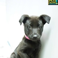 Memphis Pets of the Week (March 16-22)