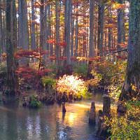 Wolf River in Autumn