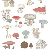 Looking to learn some fungi facts?