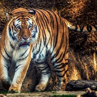 Memphis Zoo to Reopen Saturday