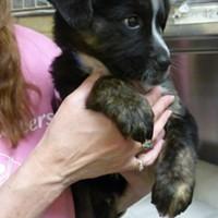Memphis Pets of the Week (Feb. 16-22)