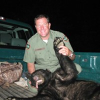 In this image from 2011, Andy Tweed holds a black bear that was found and darted at Davies Plantation.