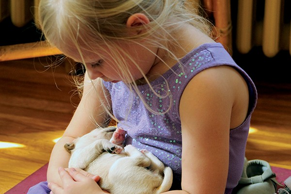 Foster family and foster puppy - KIM KOEHLER