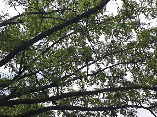 last_word_tree.jpg