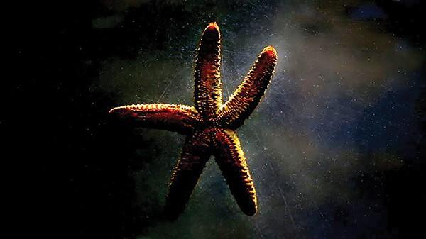 werec_072216_crosstownarts_fishstar.jpg