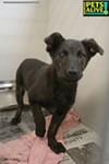 #A310660 Female, 13 weeks, 9.4 lbs Review Date: 1/30/19 I'm located at Memphis Animal Services  901-636-1416 Ext 2