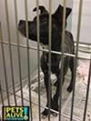 #A292823 Male, 5 months, 12 lbs Intake Date: 1/2/17 Review Date: 1/6/17 I'm located at Memphis Animal Services  901-636-1416 Ext 2
