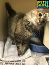 "#A292718 ""Chattanooga"" 10 years, 8 lbs OWNER SURRENDER Review Date: 12/28/16 I'm located at Memphis Animal Services  901-636-1416 Ext 2"