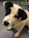 #A295673 Female, 4 months, 17 lbs Intake: 5/8/17 Review Date: 5/12/17 I'm located at Memphis Animal Services  901-636-1416 Ext 2