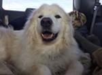 2018 American Humane Hero Dog Awards®