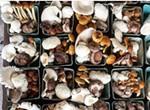 Meet the Mushroom Man: Bluff City Fungi