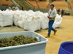 Hemp Haven: An Auction and Market Bring the Plant Into the Mainstream