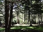 The Dark Deep Woods ...