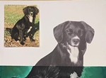 4th Annual Project Pet-Portrait Painting Party
