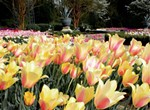 Hello Holland: 23,000 Spring Bulbs Photo Contest