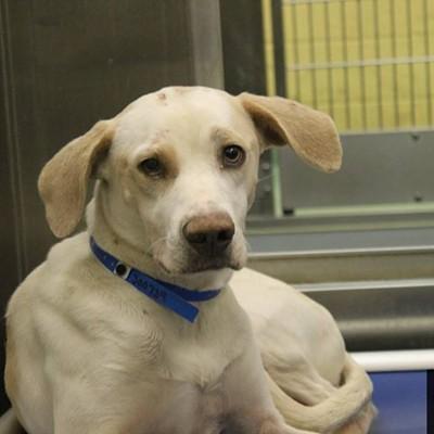 Memphis Pets of the Week (Dec. 14-20)