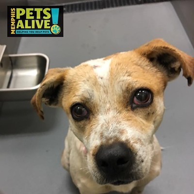 Memphis Pets of the Week (Feb. 15-21)