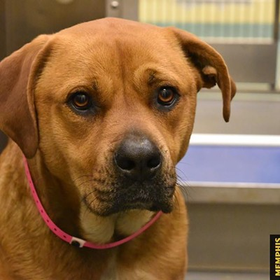 Memphis Pets of the Week (March 29-April 4)