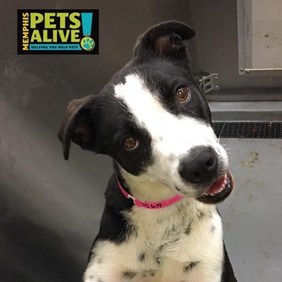 Memphis Pets of the Week (May 17-23)