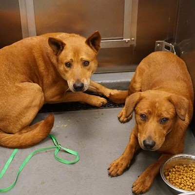 Memphis Pets of the Week (June 21-27)