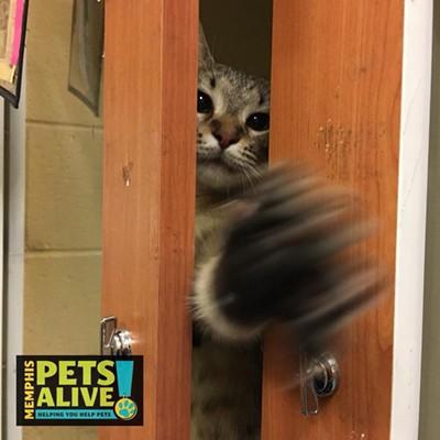 Memphis Pets of the Week (July 5-11)
