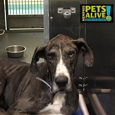 Memphis Pets of the Week (July 26-Aug. 1)
