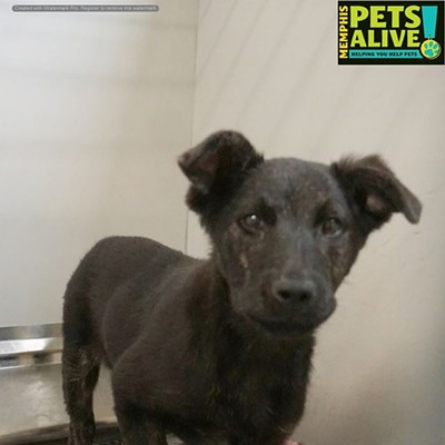 Memphis Pets of the Week (Feb. 7-13)