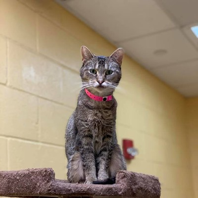 Memphis Pets of the Week (May 9-15)
