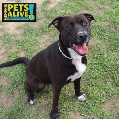 Memphis Pets of the Week (June 13-19)