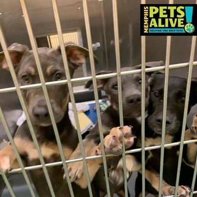 Memphis Pets of the Week (8/6/19-8/12/19)