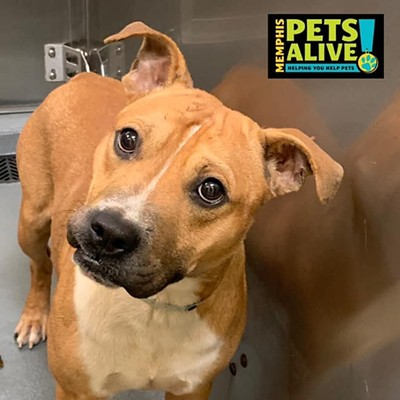 Memphis Pets of the Week (8/27-9/2)