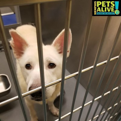 Memphis Pets of the Week (12/3/19-12/9/19)
