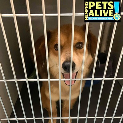 Memphis Pets of the Week (2/25/20-3/2/20)