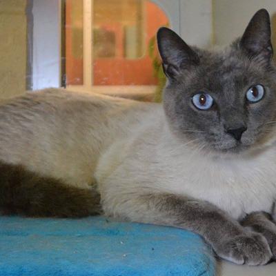 Memphis Pets of the Week (May 12-18)