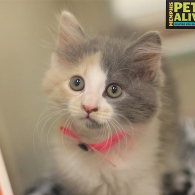 Memphis Pets of the Week (July 7-13)