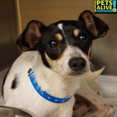 Memphis Pets of the Week (July 28-August 3)
