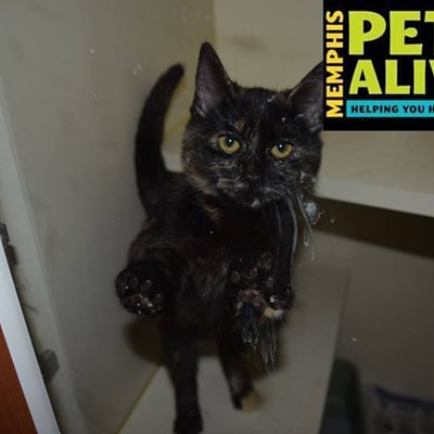 Memphis Pets of the Week (Oct. 6-12)