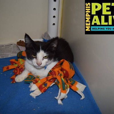 Memphis Pets of the Week (Oct. 20-26)