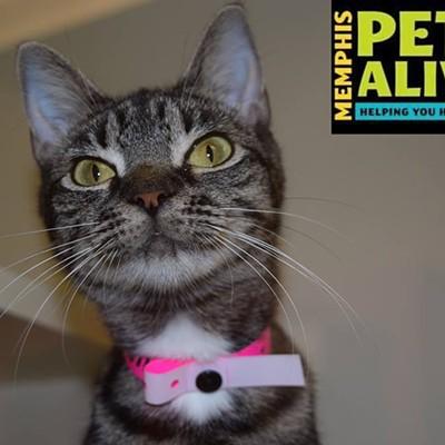 Memphis Pets of the Week (Oct. 27-Nov. 2)